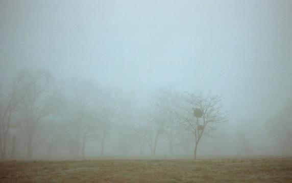 Mist_f